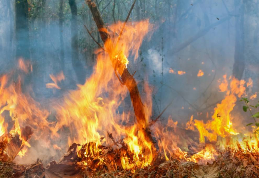 Fires in the Amazon Rainforest