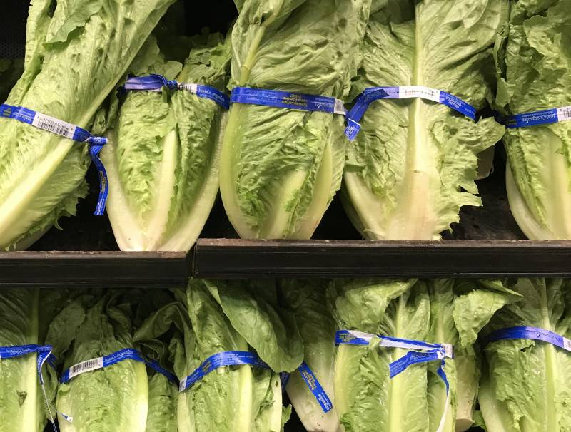 Romaine Lettuce are stacked side by side, filling the view with leafy greens.