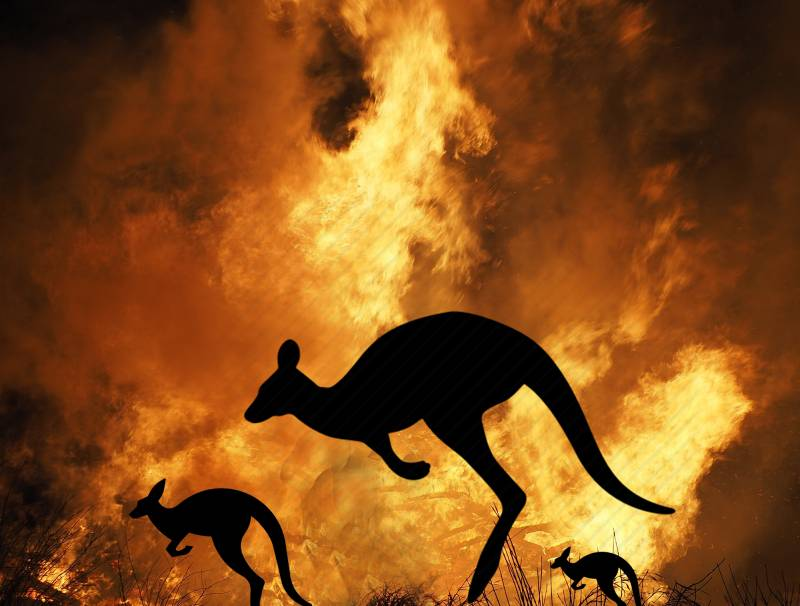 Australian animals in the fire.